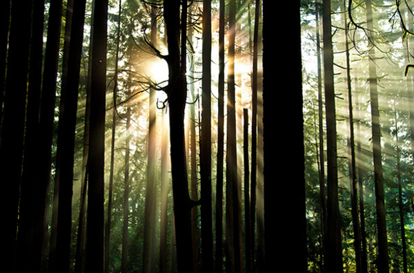 Photography Forest Sun